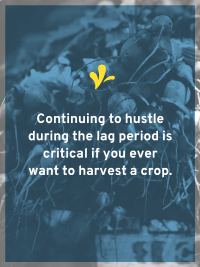 Gardening is least fun in the lag period (between planting & harvesting). But continuing to hustle in this period is critical if you ever want a harvest.